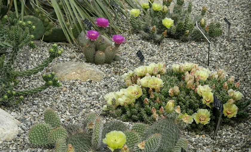 Hardy Xerophyte Garden | The Botanic Garden of Smith College