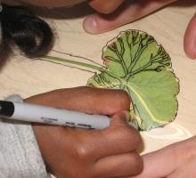 child drawing a leaf