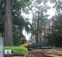 elm tree surrounded by construction