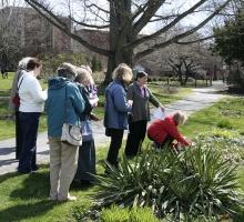 Tour of Systematics Garden